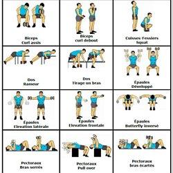 Exercice de musculation avec des haltères - Vigilance envers l ... aac9397b4c1