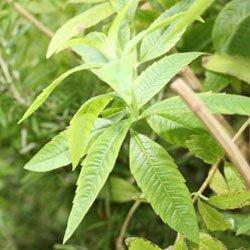 Plantes odorantes - Fleurs au jardin | Pearltrees