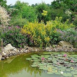Forum Aquajardin (bassin koi, jardin aquatique, mare, etang) : Voir le sujet