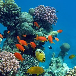 protecting our coral reefs persuasive essay pearltrees why are coral reefs so important to the biosphere