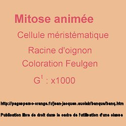 MITOSE ANIMATION TÉLÉCHARGER
