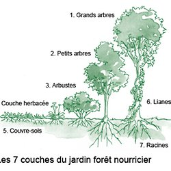 Vers La Foret Comestible Pearltrees
